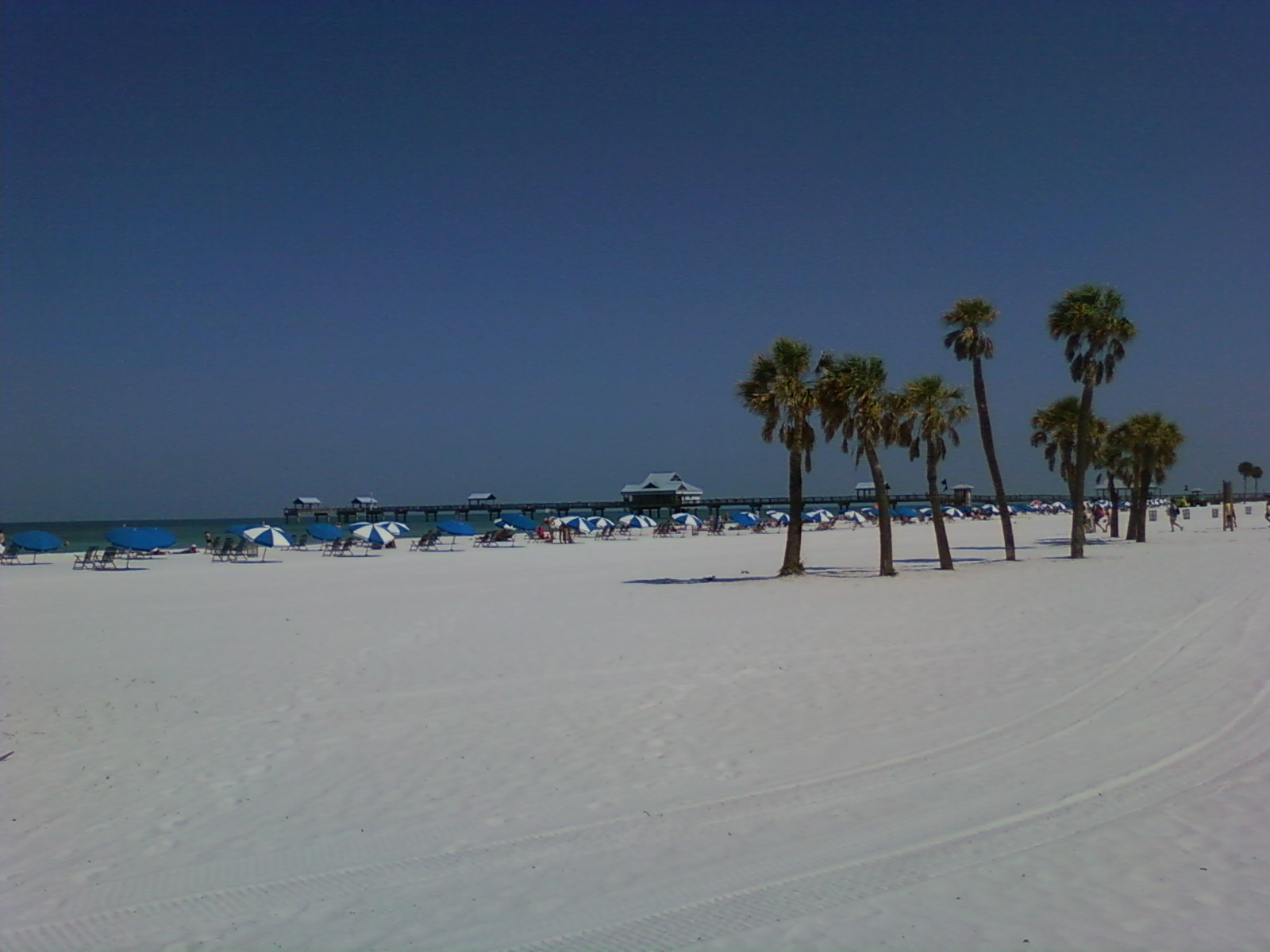 clearwater beach dating Speed dating in clearwater beach on ypcom see reviews, photos, directions, phone numbers and more for the best dating service in clearwater beach, fl.