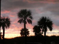 Palms trees at sunset